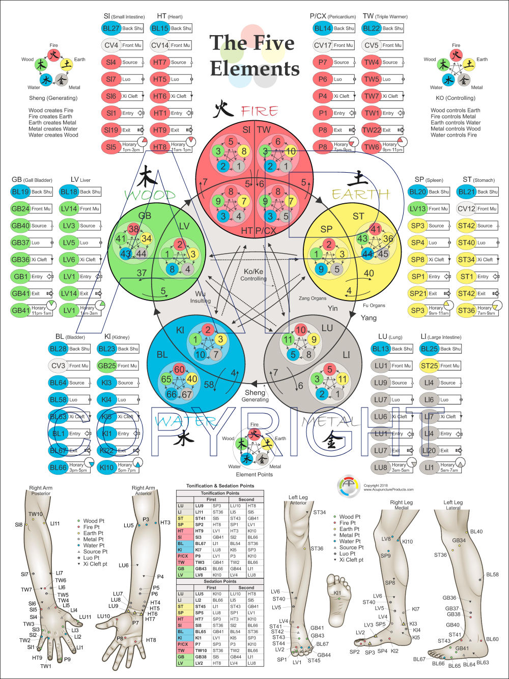 Five Elements of Acupuncture Points Poster 18 X 24