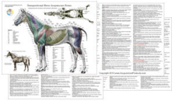 Horse Acupuncture Point Location Laminated Charts