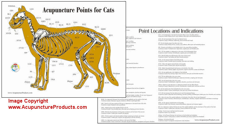 Cat Acupuncture Laminated Chart