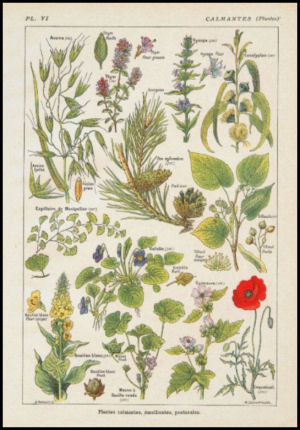 Medicinal plants in French