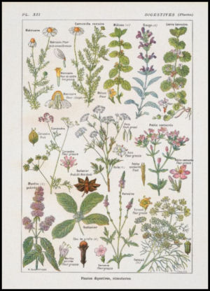 French medicinal plants