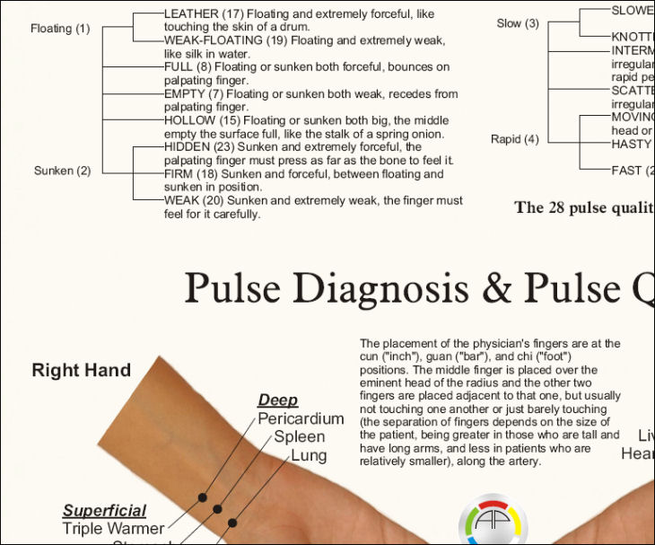 Pulse Diagnosis Acupuncture Poster