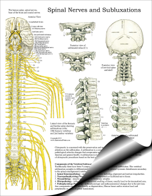 Spinal Nerves and Subluxations Pad