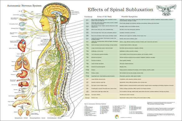 Nerves and Effects of Spinal Subluxation