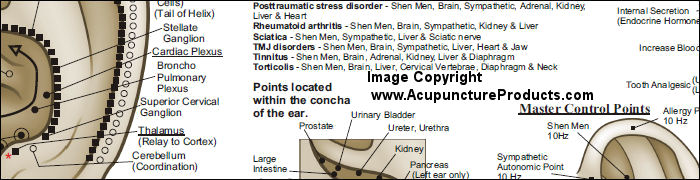 Auriculotherapy Ear Acupuncture Points Poster