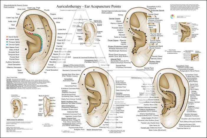 Auriculotherapy Ear Acupuncture Poster