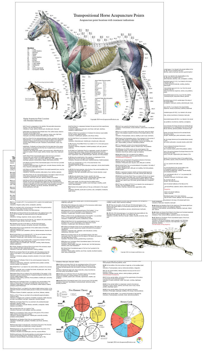 Horse Acupuncture Posters
