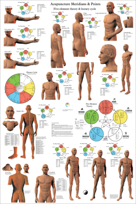 Acupuncture Posters